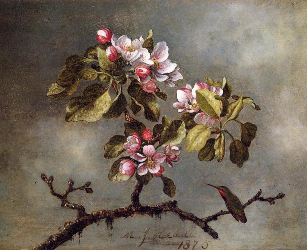 Martin Johnson Head. Hummingbird on a Blossoming Apple Tree