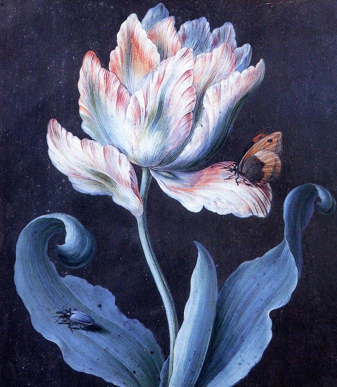 Барбара Дойч. Попугаевидный тюльпан, бабочка и скарабей