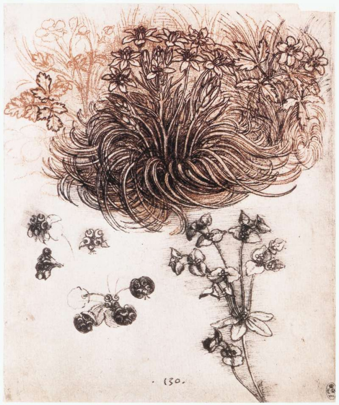 Leonardo da Vinci. The star of Bethlehem and other plants