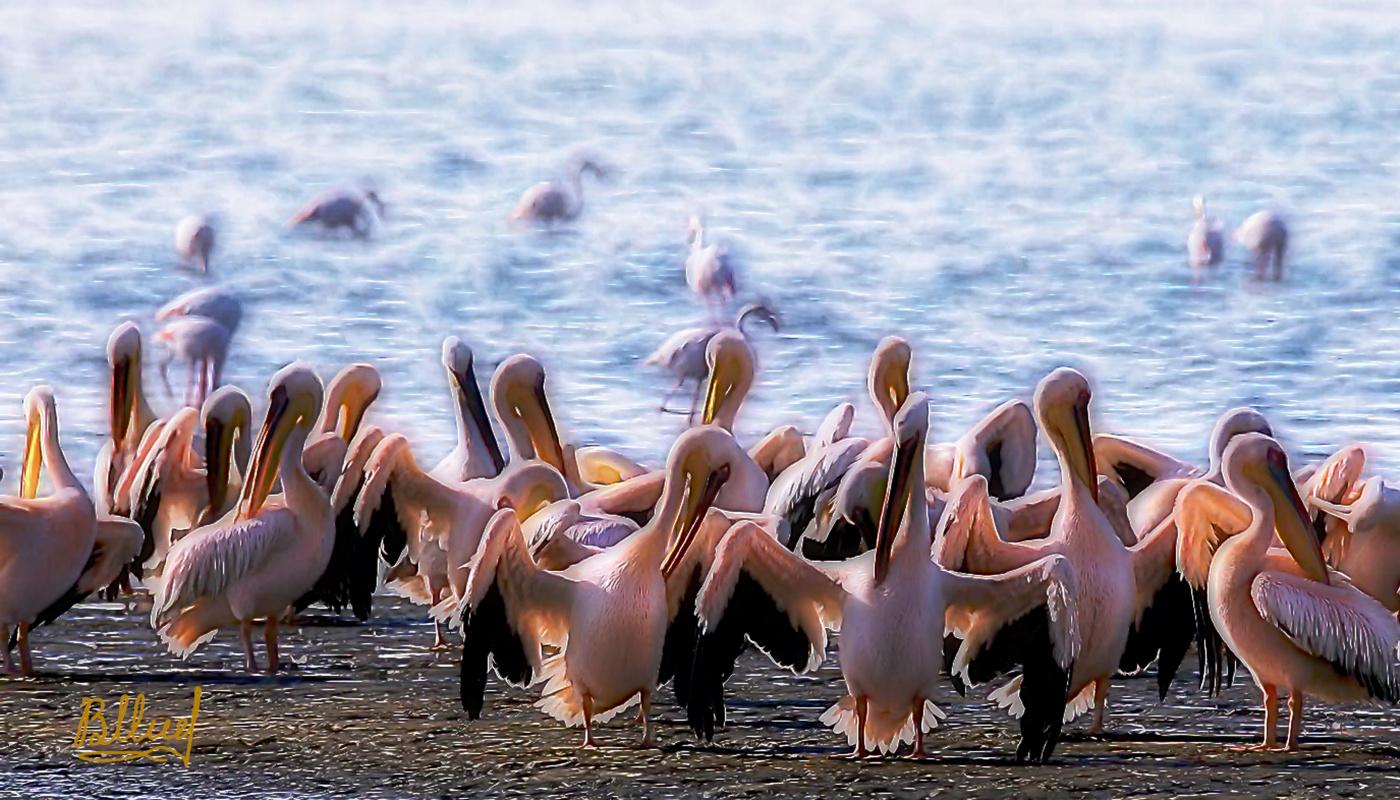 Vasiliy Mishchenko. Bird beach