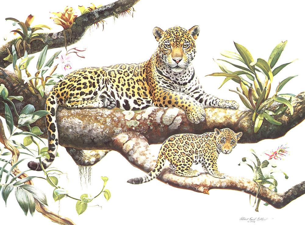 Альберт Эрл Гилберт. Амазонский ягуар и детеныш