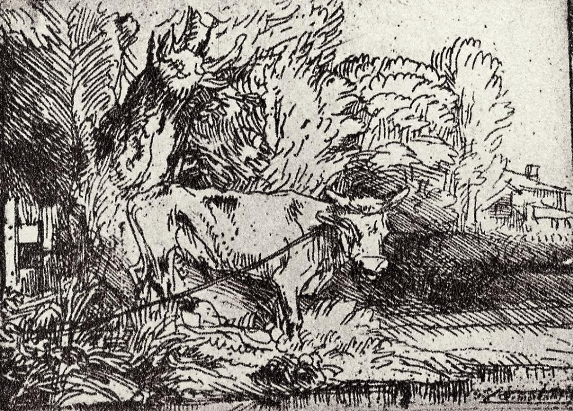 Рембрандт Харменс ван Рейн. Бык