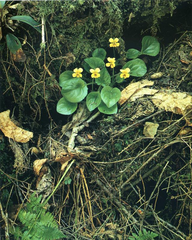 Элиот Портер. Желтые цвеы