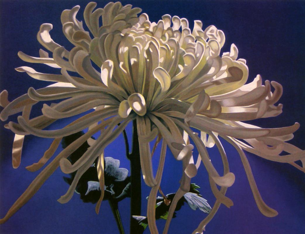 Джеймс Макгулпин. Белая хризантема