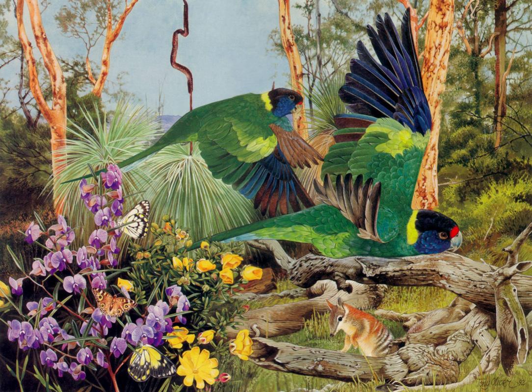 Тони Оливер. Птицы в лесу