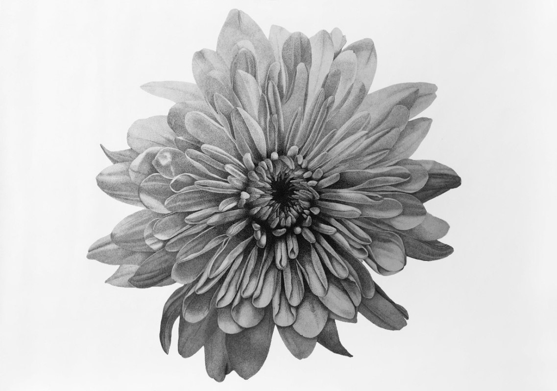 Julia Borisovna Polukhina. Chrysanthemum