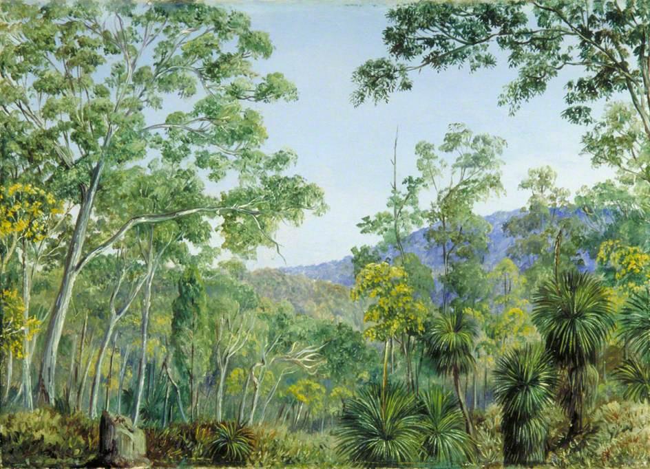 Marianna North. Rubber Trees, Xantorrhoea and Acacia, Queensland