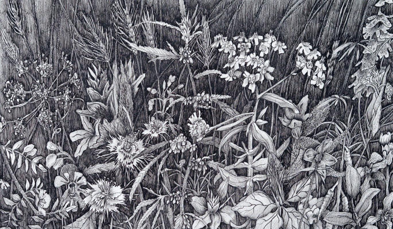 Marianna Maslova. Crimean herbs No. 8