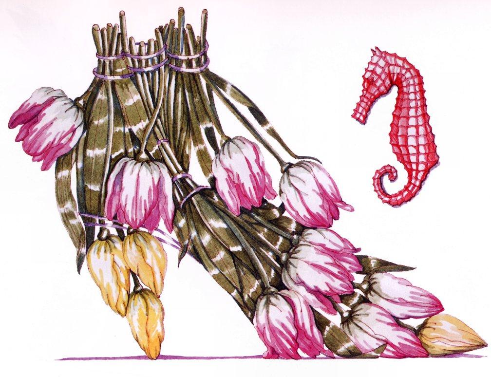 Dennis Kite. Tulip and sea horse