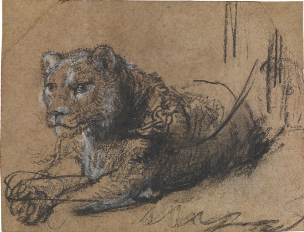 Рембрандт Харменс ван Рейн. Отдыхающий молодой лев