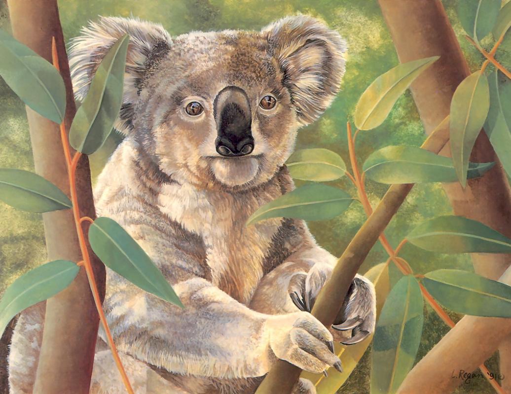 Laura Regan. Koala