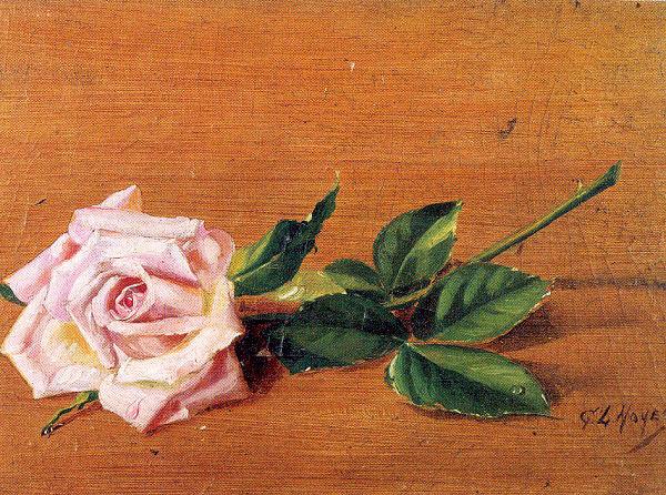 George Noyes. Rose