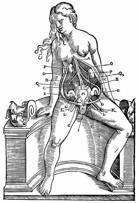 """Ханс Бальдунг. Иллюстрация к """"Анатомии"""" Вальтера Херманна Риффа, Расположение гениталий у сидящей женщины"""