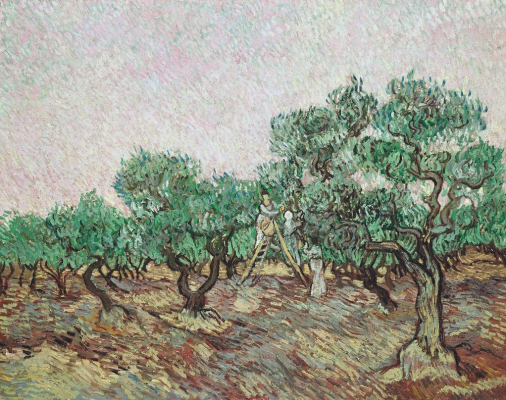 Vincent van Gogh. The collection of olives