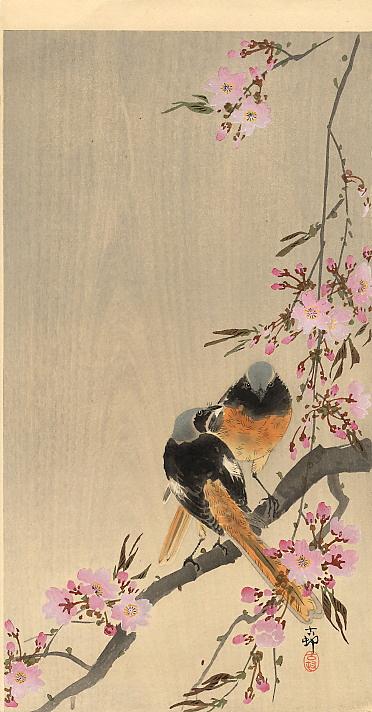 Ohara Koson. Redstart on a branch of Sakura