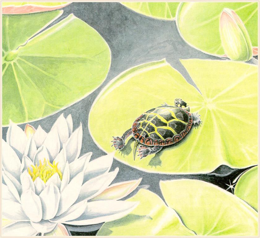 Давид Кэрролл. Год черепахи 05