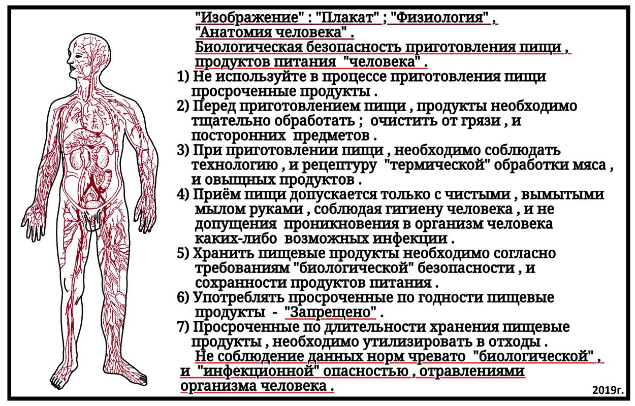 Arthur Gabdrupes. '' Image '': '' Poster ''; '' Physiology '', '' Human Anatomy '', 2019 .