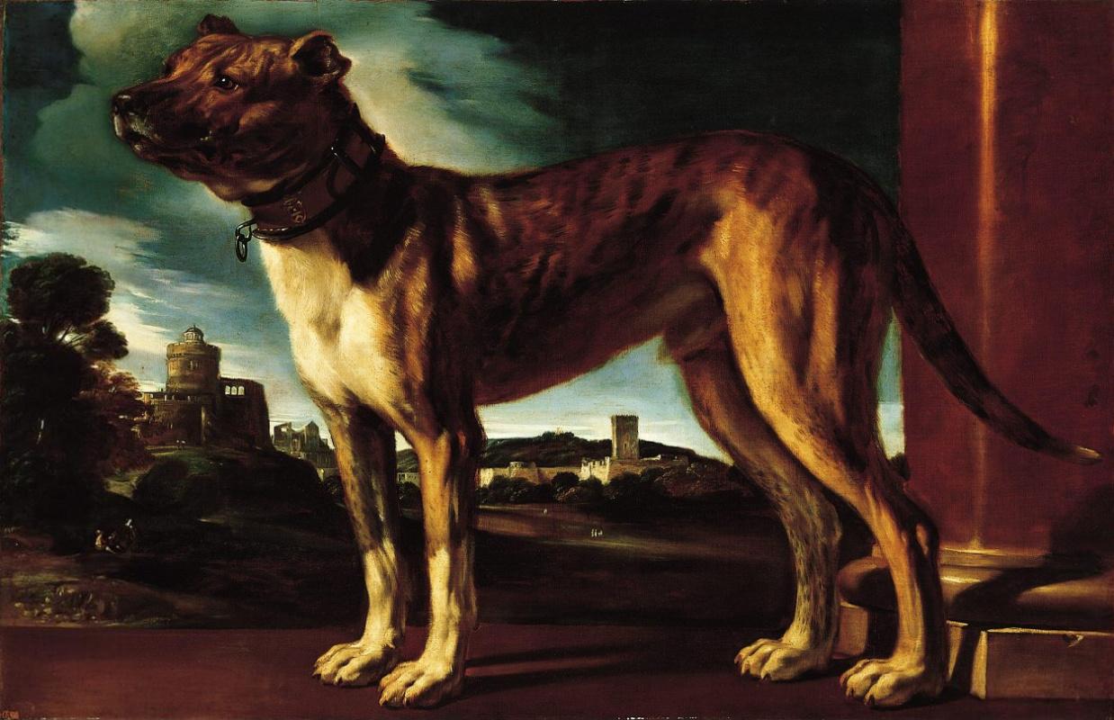 Джованни Франческо Гверчино. Собака семьи Альдрованди