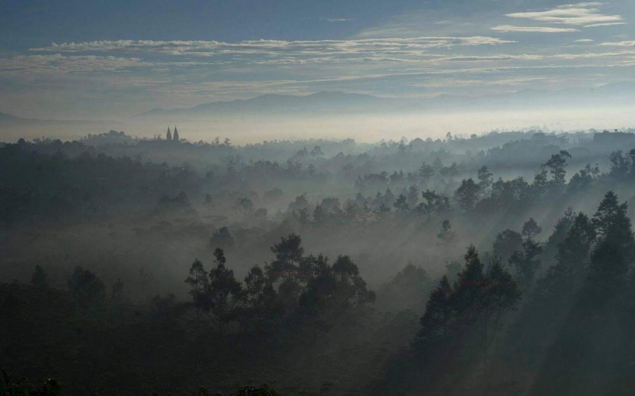 Davidson Hames. Early morning forest