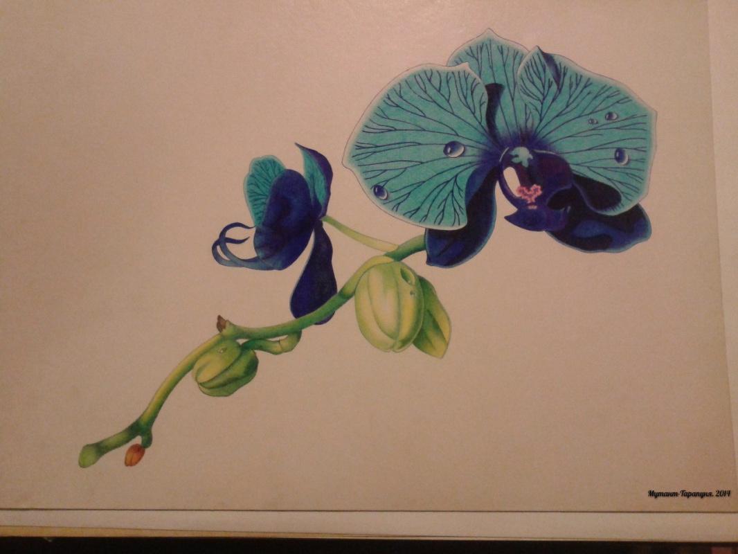 Alexey Olkhovatsky. Orchid