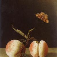 Адриан Коорт (Коорте). Бабочка над двумя персиками на каменной столешнице