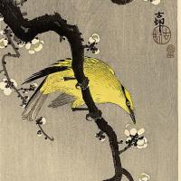 Птицы 96