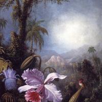Цветущие орхидеи и пассифлоры и колибри