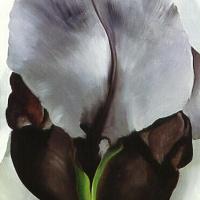Джорджия О'Киф. Темный ирис. № 1