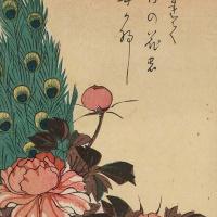 """Утагава Хиросигэ. Павлин на склоне и пионы. Серия """"Птицы и цветы"""""""