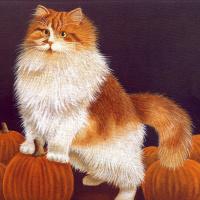 Коты. Октябрь 94