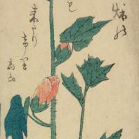 Утагава Хиросигэ. Мальва