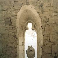 Сова в амбразуре готического окна