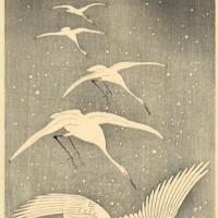 Птицы 89