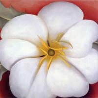 Цветы 37