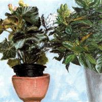 Авигдор Ариха. Комнатные цветы