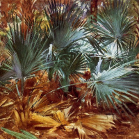Джон Сингер Сарджент. Пальмовые листья