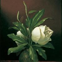 Мартин Джонсон Хед. Два цветка магнолии в стеклянной вазе