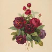 Pierre-Joseph Redoute. Bouquet of roses