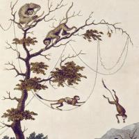 """Обезьяны в джунглях. Джон Габриель Стедман. """"Рассказ о пятилетней экспедиции против восставших негров Суринама"""""""