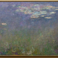 Water Lilies (Agapanthus)