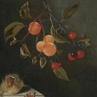 Адриан Коорт (Коорте). Натюрморт с бабочкой, абрикосами, вишней и каштаном