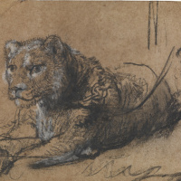 Rembrandt Harmenszoon van Rijn. Young Lion Resting