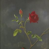 Мартин Джонсон Хед. Красная роза и рубиновый колибри