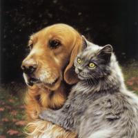 Лесли Харрисон. Кот и собака