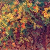 Гранаты на дереве. Майорка