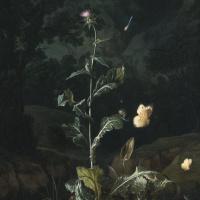 Ночной натюрморт в лесу
