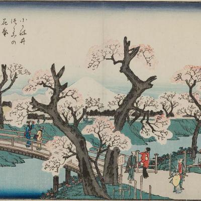 Цветущие вишневые деревья на набережной в Коганай