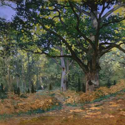 Bodmer oak, forest of Fontainebleau
