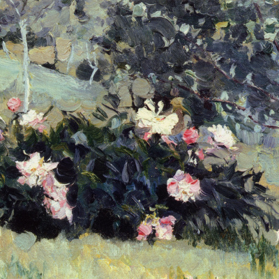 Blooming peonies