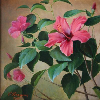 Gennady Shotovich Bartsits. Winter gift. Hibiscus